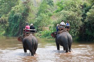 elephant park indonesia
